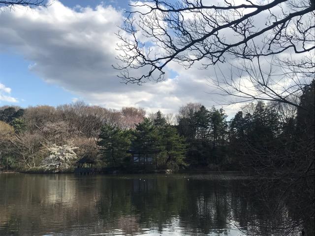 桜20180323-04