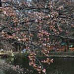 桜20180323-11