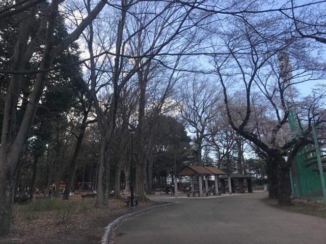 桜20180323-13