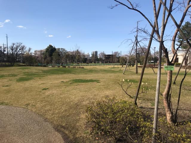 桜20180323-02