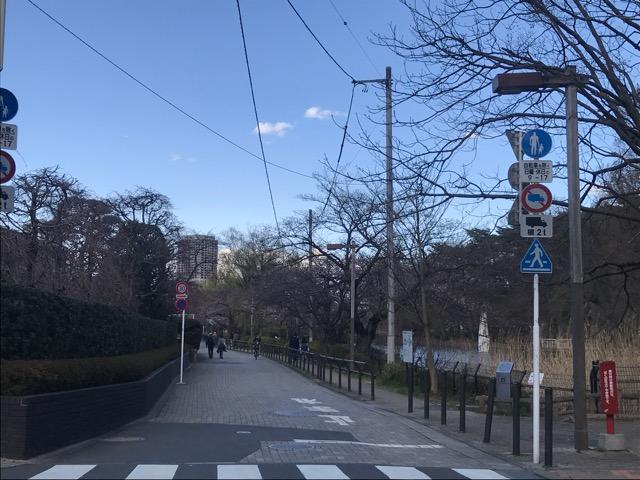 桜20180323-09