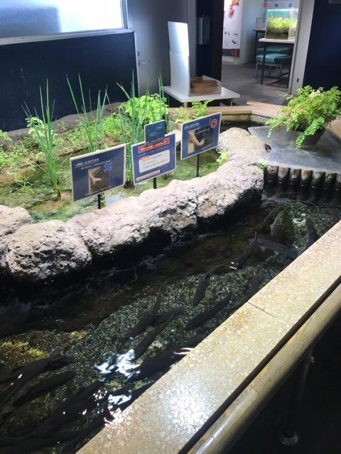 井の頭動物園-19