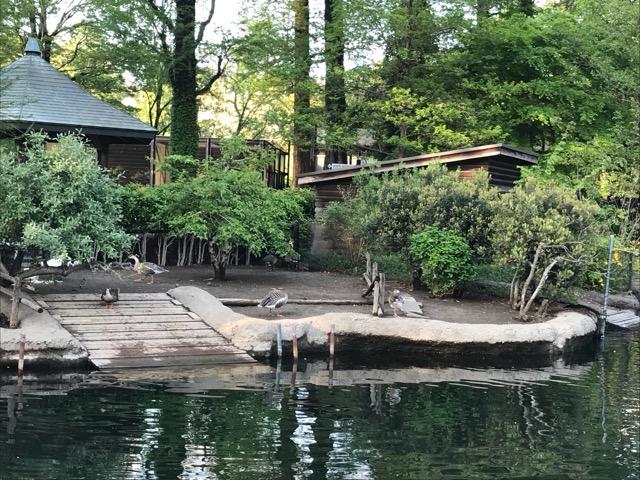井の頭動物園-27