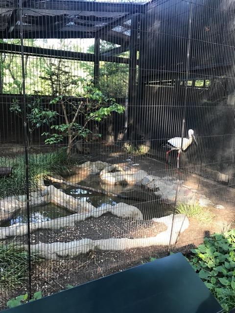 井の頭動物園-13